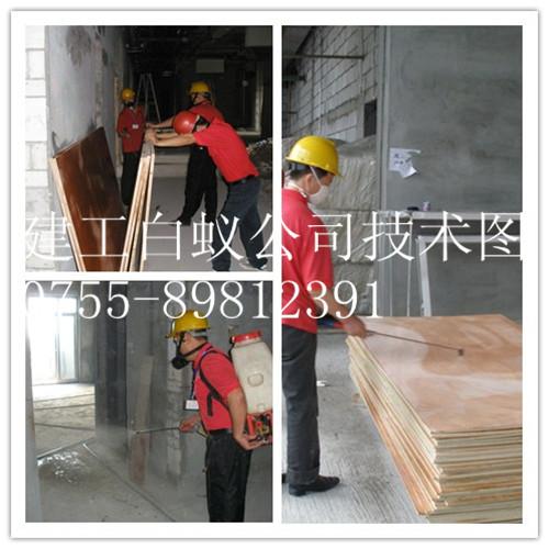 深圳防白蚁工程